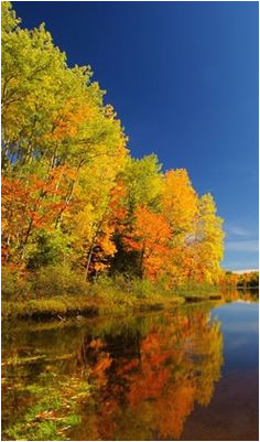 California Fall Color Map 49 Best Wisconsin S Fall Color Images Wisconsin Wisconsin Fall