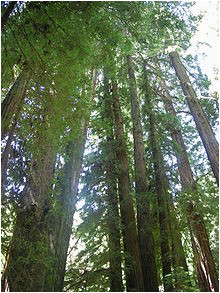 Old Growth forest oregon Map List Of Old Growth forests Wikipedia