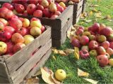 Apple Hill California Map Fall events at Apple Hill Farms