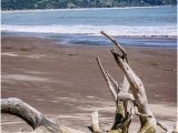 Bolinas California Map Driftwood Picture Of Bolinas Beach Bolinas Tripadvisor