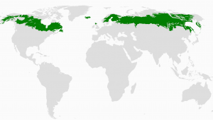 Boreal forest Map Canada Boreal forest Of Canada Wikipedia