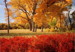 California Fall Color Map A State by State Guide to Fall Colors