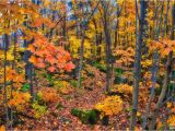 Fall Foliage Map New England Fall Foliage In Quebec Travel to Eat