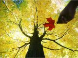 Fall Foliage Map New England the Best Places to See Fall Foliage In Quebec