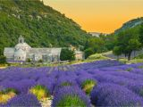 France Lavender Fields Map the 10 Best Things to Do In Provence France