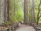 Giant Redwoods California Map California Redwood forests where to See the Big Trees