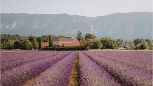 Lavender Fields France Map south Of France Provence Guide Find Us Lost