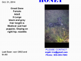 Mabank Texas Map Lost Dog Great Dane Mabank Tx United States Save Rocky the