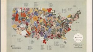 Map Of Europe 1955 A Midcentury Map Of American Wildflowers Wildflower