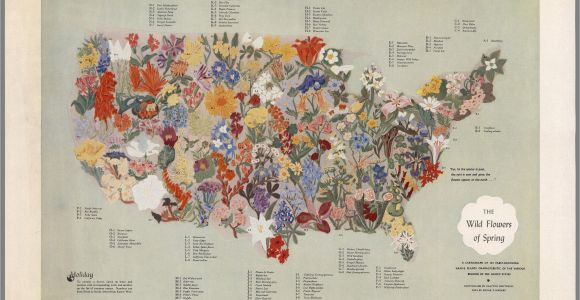 Map Of Europe 1955 A Midcentury Map Of American Wildflowers Wildflower