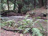 Map Of Muir Woods California Muir Woods National Monument Wikipedia