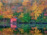 Michigan Fall Color Map A State by State Guide to Fall Colors