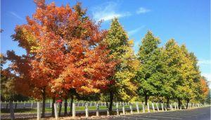 Michigan Fall Colors Map Fall Foliage tours In Michigan
