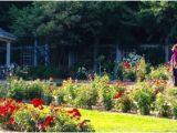 Minnesota Landscape Arboretum Map Rose Garden at Minnesota Landscape Arboretum Picture Of Minnesota