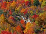 North Carolina Foliage Map 123 Best Fall Beautiful Season In north Carolina Images Nature