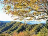 North Carolina Foliage Map 200 Best Fall Color In Nc Mountains Images Nc Mountains Blue