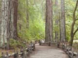 Northern California Redwoods Map California Redwood forests where to See the Big Trees