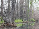 Okefenokee Swamp Map Of Georgia 44 Best Okefenokee Swamp Ga Images On Pinterest Georgia On My Mind
