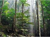 Old Growth forest oregon Map Old Growth forest Wikipedia
