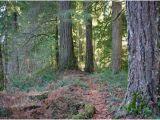 Old Growth forest oregon Map Whittaker Ridge Loop Hike Hiking In Portland oregon and Washington