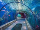 Oregon Coast Aquarium Map the Sea Tunnels Get there Early to Beat the Crowds Picture Of