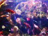 Oregon Coast Aquarium Map Underwater Color Picture Of oregon Coast Aquarium Newport