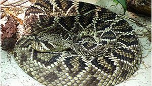 Poisonous Snakes In Ohio Map List Of Fatal Snake Bites In the United States Wikipedia
