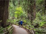Redwood Trees In California Map California Redwood forests where to See the Big Trees
