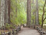 Redwood Trees In California Map California Redwood forests where to See the Big Trees Perfect Map Of
