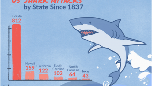 Shark attack Map California Shark attacks In the United States by State