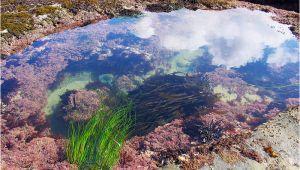 Tide Pools oregon Coast Map Tidal Zones oregon Tide Pools