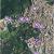 Tivoli Italy Map Tivoli Dayscovery On the App Store