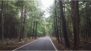 Tunnel Of Trees Michigan Map Tunnel Of Trees Picture Of Tunnel Of Trees M119 Harbor Springs